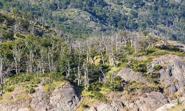 New Researchers Discovers , An excess of CO2 Has an Unnerving impact on The globe's Trees